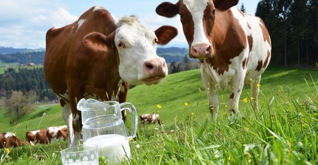 Công bố sữa bò